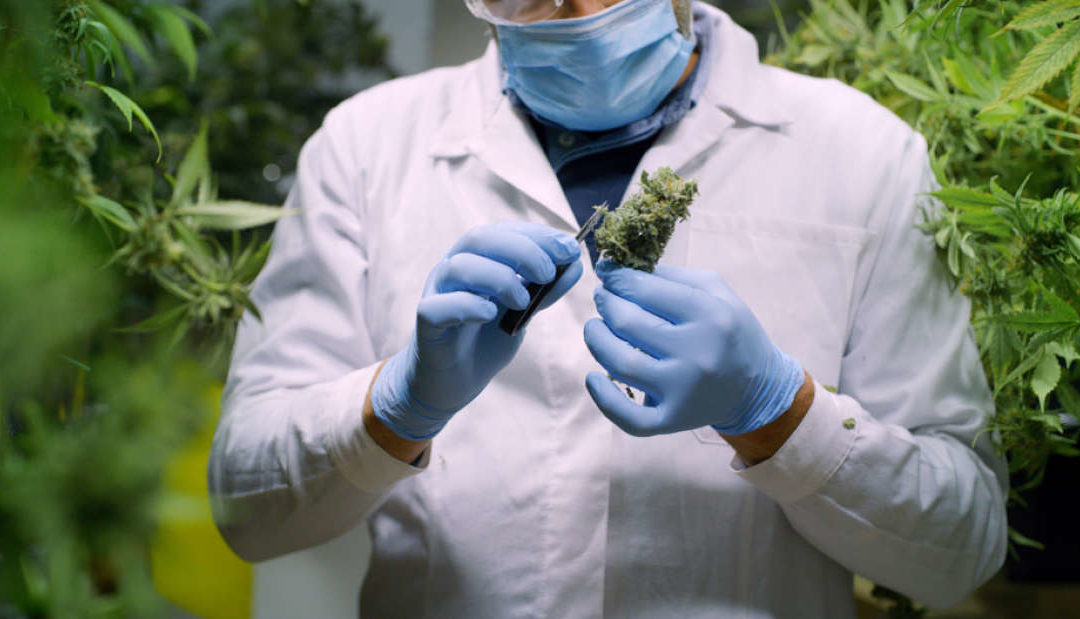 Scientists Isolate And Describe Two New Cannabinoids Found In Marijuana